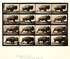 Animal locomotion. Plate 700 (Boston Public Library).jpg
