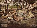 Anne of Green Gables 1919-scene2.jpg