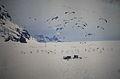 Antártida. Década de 1970. 52.JPG