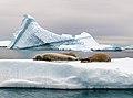 Antarctica 2013 Journey to the Crystal Desert (8369553897).jpg
