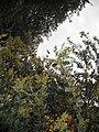 Apoidea 031.jpg