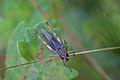 Araignées, insectes et fleurs de la forêt de Moulière (Les Chirons Noirs) (28423568504).jpg