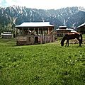 ArangKel Meadows Neelum valley kashmir.jpg