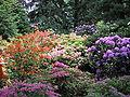 Arboretum w Kórniku 1.jpg