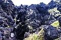 Arcos do Cachorro, aspecto das rochas costeiras, Bandeiras, concelho da Madalena, ilha do Pico, Açores.JPG