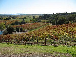 North Coast AVA - Vineyards in Sonoma County