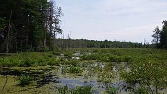 Assabet River National Wildlife Refuge - Marsh in ARNWR