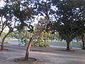 Aterro do Flamengo, Av. Beira Mar, Parque Brigadeiro Eduardo Gomes 06.jpg