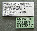 Atta sexdens casent0173817 label 1.jpg