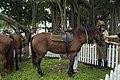 Australian Light Horse.jpg