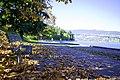 Autumn, Stanley Park Oct, 2015 - 21767515668.jpg