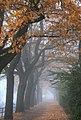 Autumn 2701345.jpg