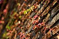 Autumn Leaves (43980334).jpeg