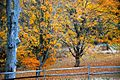 Autumn Leaves 27.jpg
