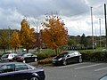 Autumn colours in the car park - geograph.org.uk - 1554602.jpg