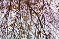 Autumn in iran پاییز در ایران- استان قم 01.jpg
