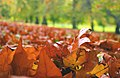 Autumn leaves in St. James's Park.jpg