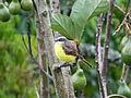 Aves de Calderas, Edo Barinas.JPG