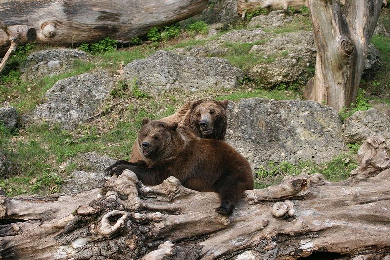 File:Bären im Zoo Salzburg.JPG