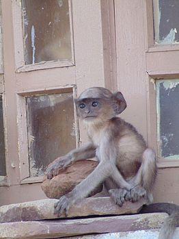 Baby Monkey pic.jpg
