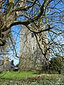 Ballaghmore Castle - geograph.org.uk - 2329547.jpg