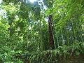 Bambous derrière le mur 1.jpg