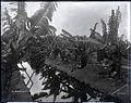 Banana Plantation (5), photograph by Brother Bertram.jpg