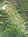 Banaue Viewpoint (3294285173).jpg