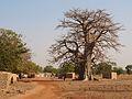 Baobab Pitmoaga.jpg