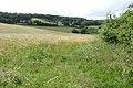 Barley and oats by Langdon Road - geograph.org.uk - 1409165.jpg