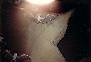 Gondwana Rainforest Sanctuary - Bat sculptures at Gondwana Rainforest Sanctuary