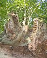 Baum Hohlweg.jpg