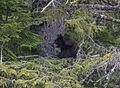 Bear 2 Tree 118.jpg