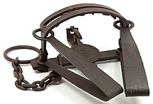 A Double spring steel bear trap made in mid-nineteenth century
