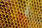 Bee on his alvear.jpg
