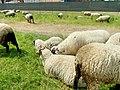 Bei der Wollkämmerei (1).jpg