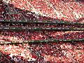Benfica!.jpg