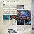 Berlin-Grunewald Sandgrube im Jagen 86 Informationstafel 3.jpg