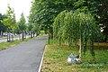 Bersarin-Birke - Berlin-Frife 2013 Juli - 1264-1144-120.jpg