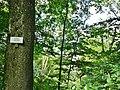 Bertaburg (die gibt es gar nicht mehr ...) - panoramio.jpg