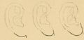 Bertillon - Identification anthropométrique (1893) 062.1.png