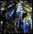 Bican Tomas hasselblad prales 09.jpg