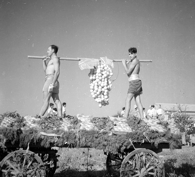 File:Bickurim 1953.jpg