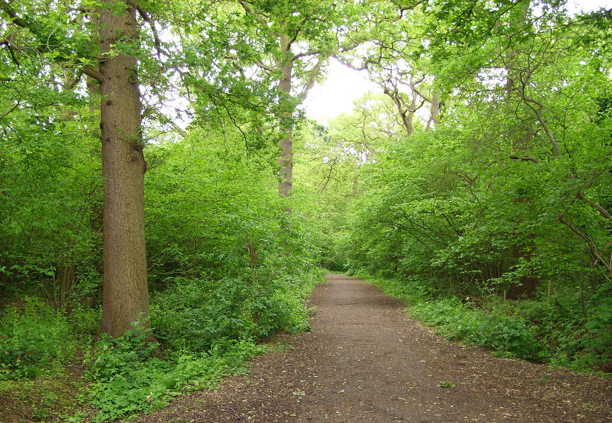 Big Wood and Little Wood - Wikipedia