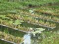 Biorremediacion Tratamiento de aguas de un canal contaminado.JPG