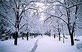 Bitola Park.jpg
