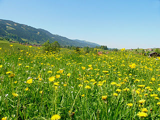 Meadow field vegetated primarily by grass and other non-woody plants (grassland)