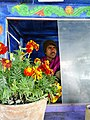 Boat Pilot with Flower Pot - Sundarbans District - South of Kolkata - India (12356206464).jpg