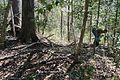 Boones Mounds, Arkansas DSC 0879 (8564726799).jpg