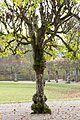 Boskett Schlosspark Schleissheim-5.jpg